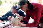 Veronica Donahue (right) examines a human skull with Kela Qendro (left), an assistant to the director of Butrint National Park, Ani Tare.