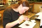 Student prepares tissues during botanical research