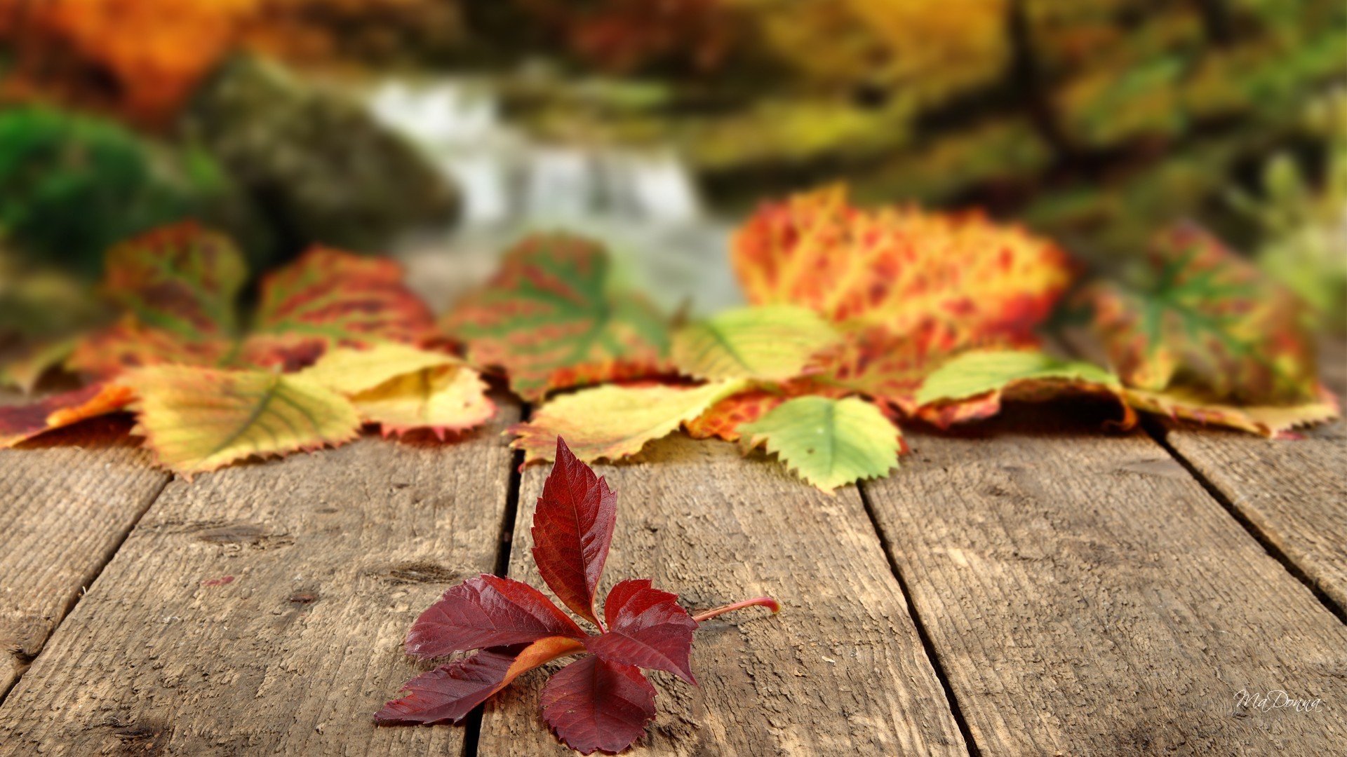 nature-landscapes_hdwallpaper_where-autumn-leaves-fall_13215