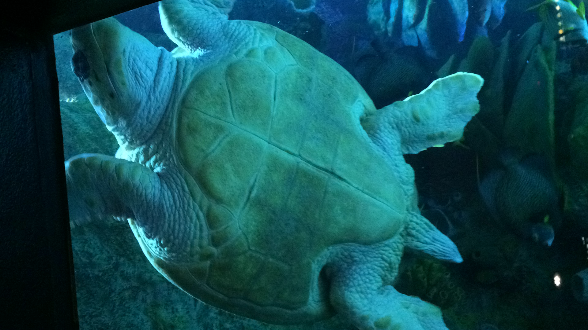 This turtle was inside the big tank that I mentioned