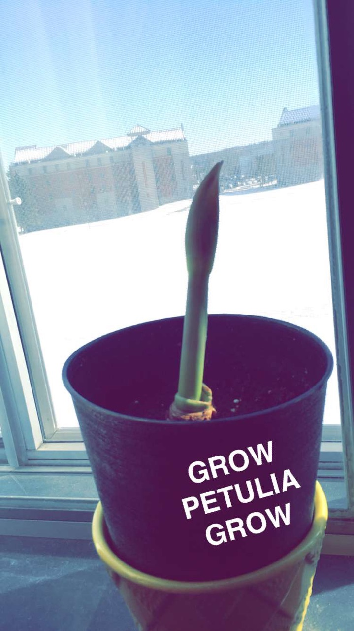 (My little bud! I can't wait for her to bloom. I named her Petulia.)